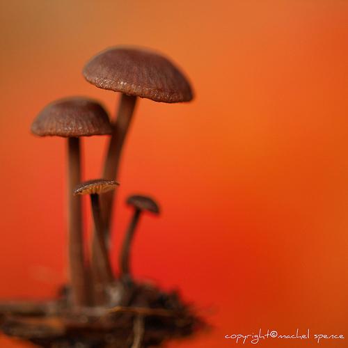 фотографии грибов (89)