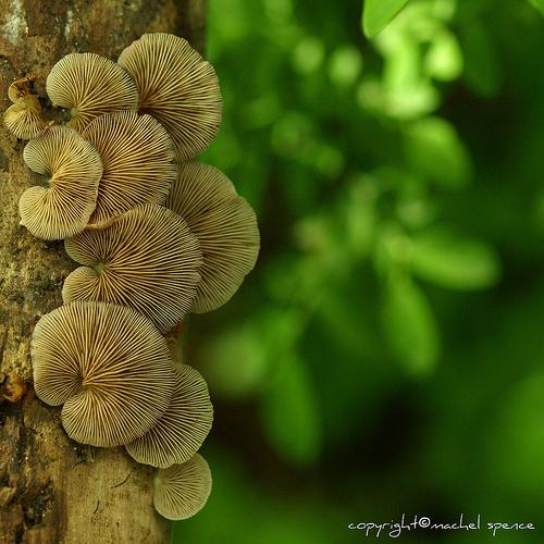 фотографии грибов (80)