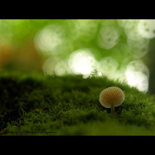 фотографии грибов (78)