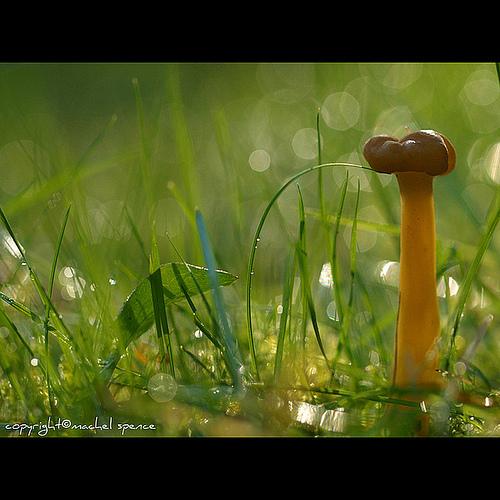 фотографии грибов (76)