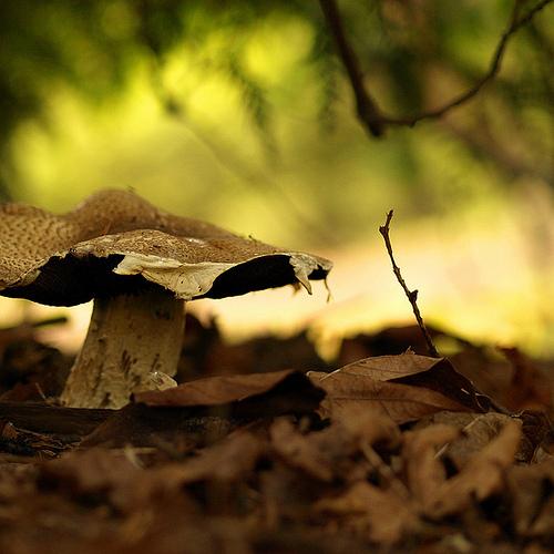 фотографии грибов (75)