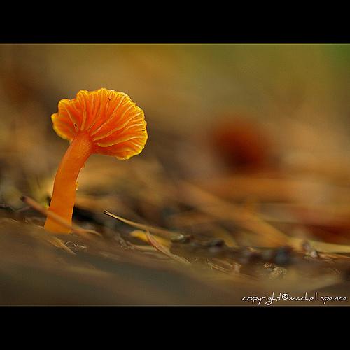 фотографии грибов (74)