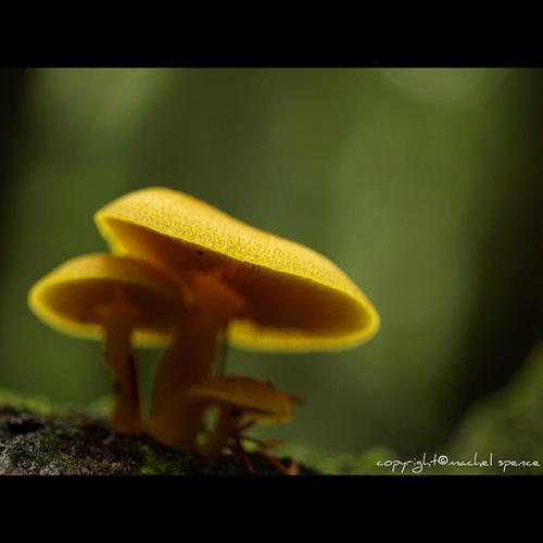 фотографии грибов (73)