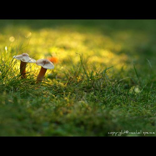 фотографии грибов (72)