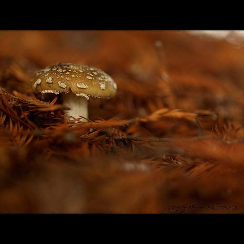 фотографии грибов (71)