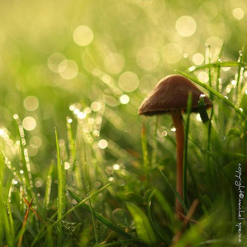 фотографии грибов (88)
