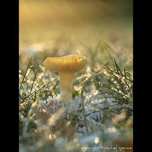 фотографии грибов (70)