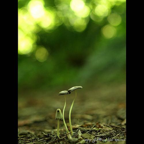 фотографии грибов (69)