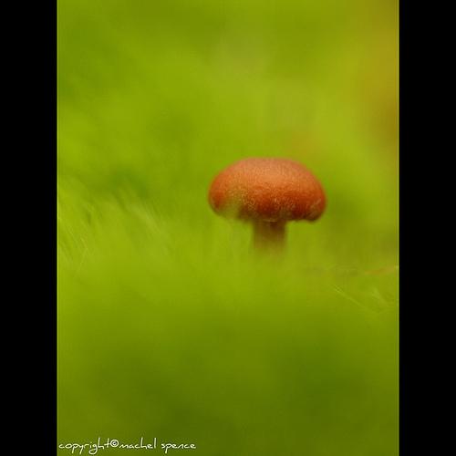 фотографии грибов (68)
