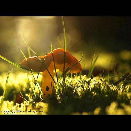 фотографии грибов (67)