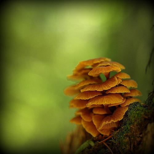фотографии грибов (64)