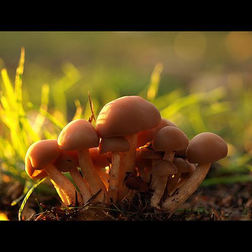 фотографии грибов (63)