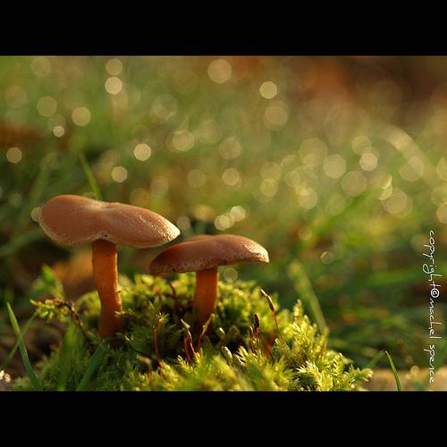 фотографии грибов (62)
