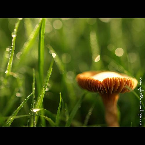 фотографии грибов (61)