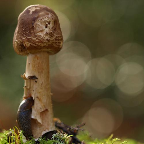 фотографии грибов (87)