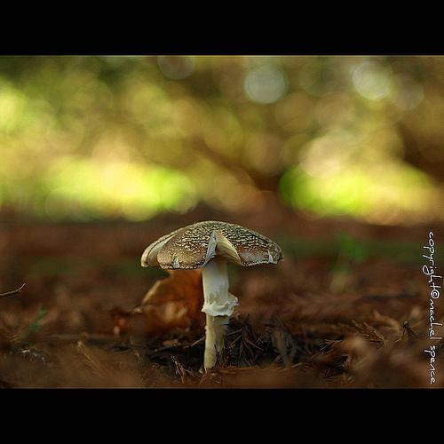 фотографии грибов (60)