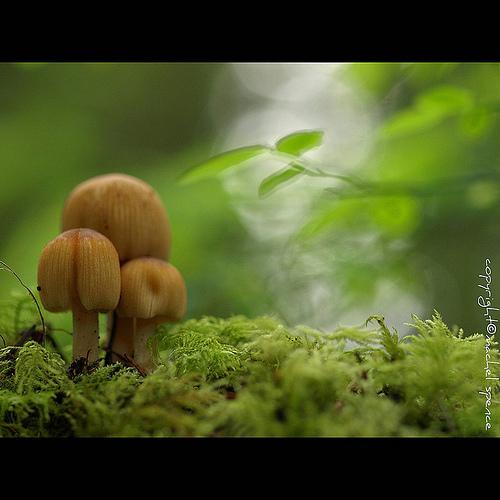 фотографии грибов (59)