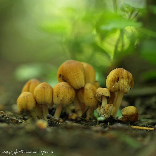фотографии грибов (58)