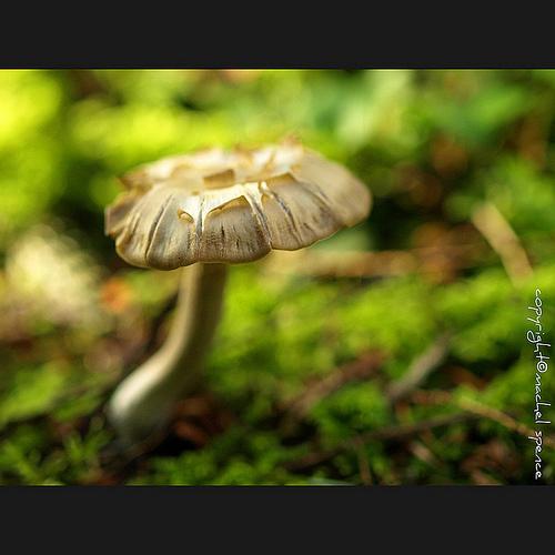 фотографии грибов (57)