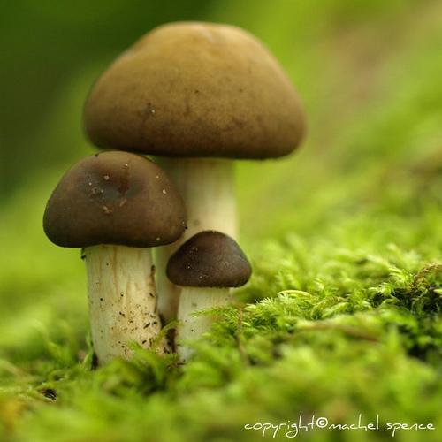 фотографии грибов (56)