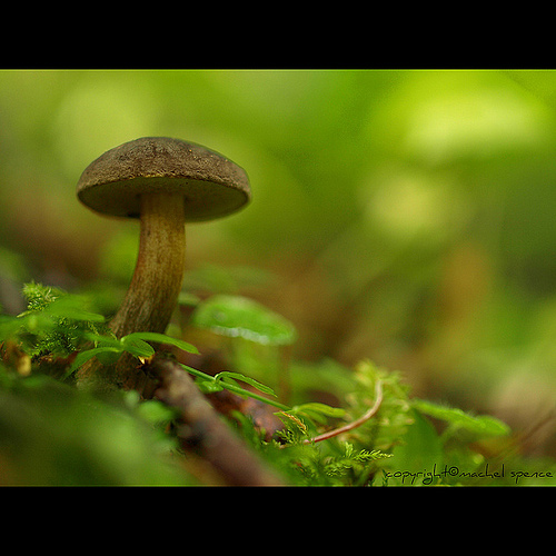 фотографии грибов (54)