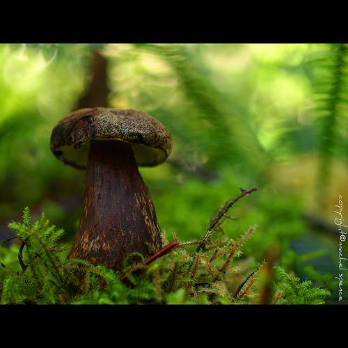 фотографии грибов (53)