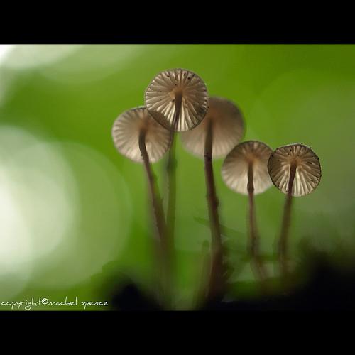 фотографии грибов (52)