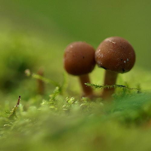 фотографии грибов (51)