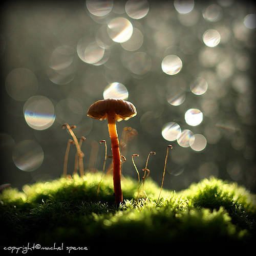 фотографии грибов (86)
