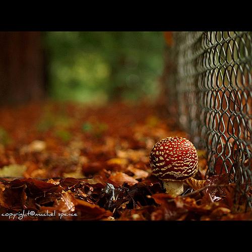 фотографии грибов (50)