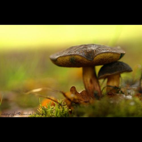 фотографии грибов (49)