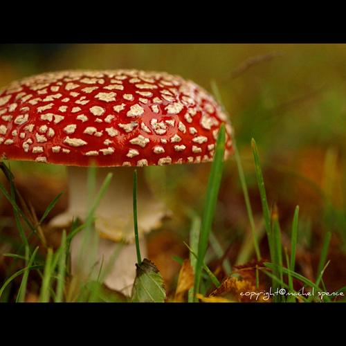 фотографии грибов (48)