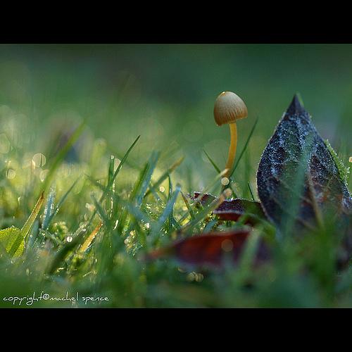 фотографии грибов (47)