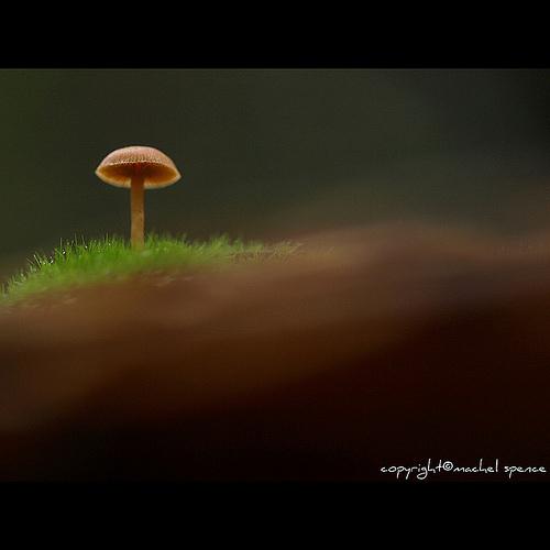 фотографии грибов (46)