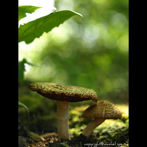 фотографии грибов (45)