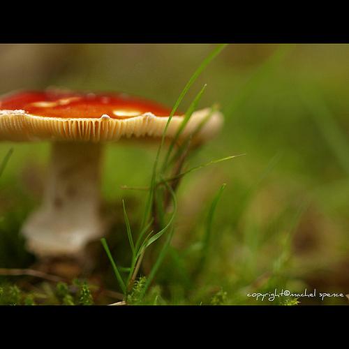 фотографии грибов (44)