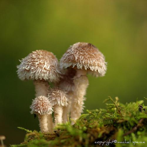 фотографии грибов (42)