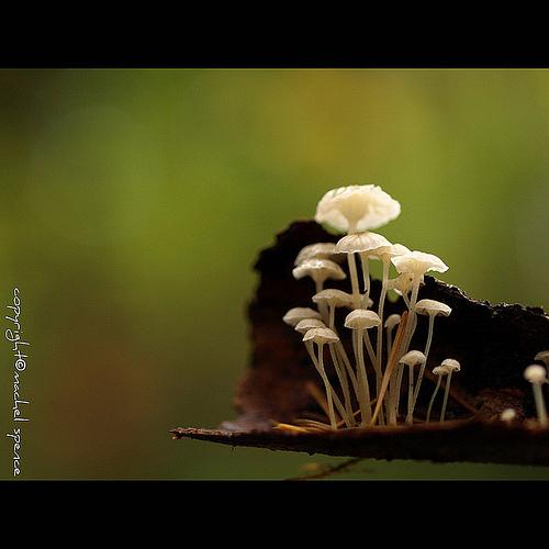 фотографии грибов (41)