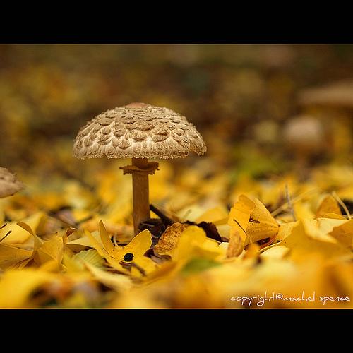 фотографии грибов (40)