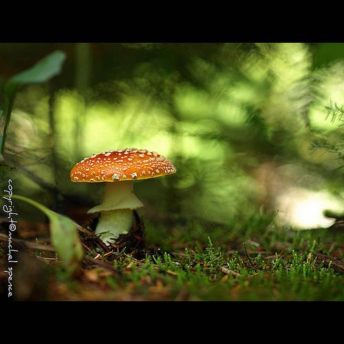 фотографии грибов (38)