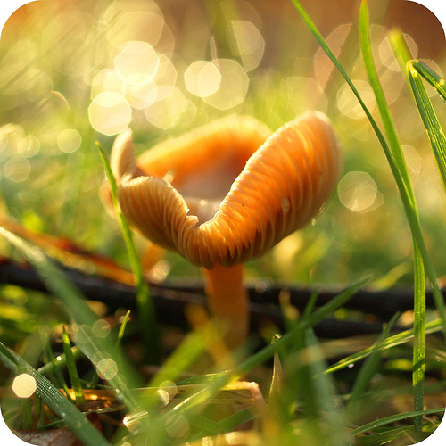фотографии грибов (37)