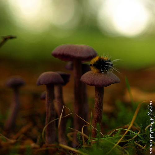 фотографии грибов (36)