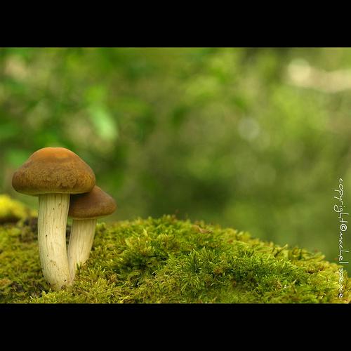фотографии грибов (35)
