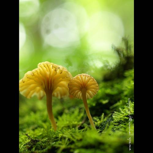 фотографии грибов (34)