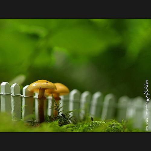 фотографии грибов (33)