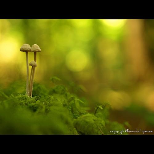 фотографии грибов (32)