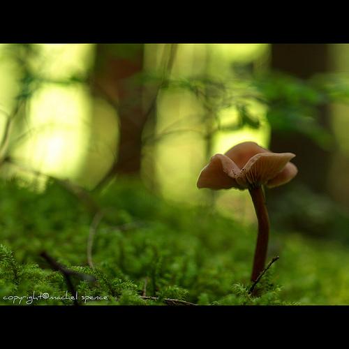 фотографии грибов (31)