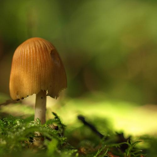 фотографии грибов (84)
