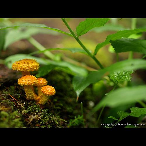 фотографии грибов (30)
