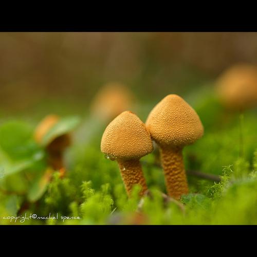 фотографии грибов (29)